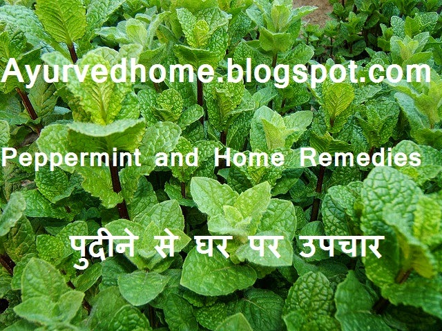 Green Peppermint Pudina Benefits in Diseases, हरे पुदीने से घर पर उपचार , Green Peppermint use at home, Pudina Benefits in Diseases, pettermint medicinal use, Abdominal pain relief with peppermint, Treatment of cholera with pudina, Entrails of the treatment, Entrails of the treatment, vaat Pit Rog, Treatment of intestinal bug, Scorpion bites treatment, To treat cold and Hiccups,