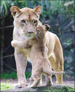 صور لحيوانات في لحظات نادرة لن تتكرر 15.jpg