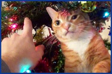 WhatsApp Bilder zu Weihnachten - lustige bilder zur weihnachtszeit