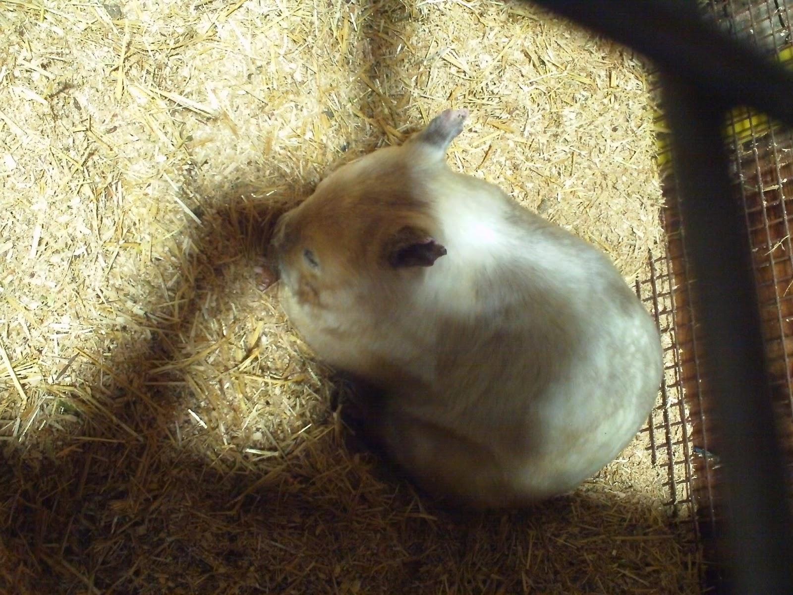 Albino wombat - photo#15