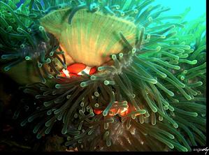 Dumaguete Diving