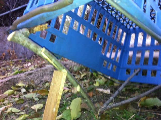How To Build A Live Bird Trap