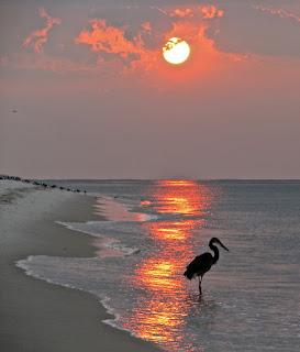 Sandestin-Seagrove Beach Vacation Rentals