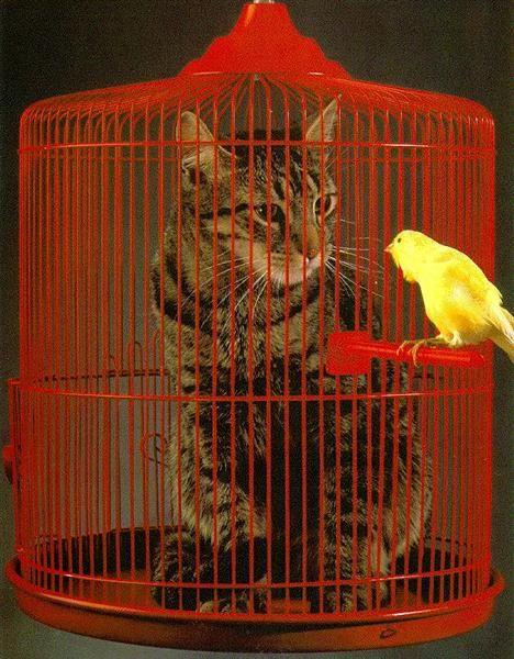 Las fotos más graciosas y divertidas de gatos pequeños
