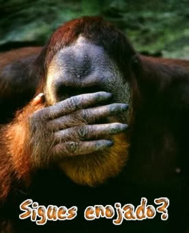 imagen de mono