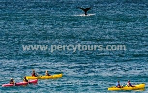 Kayaking with the Whales of Hermanus,South Africa