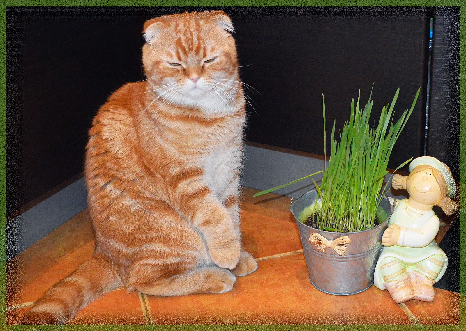 витамины для питания котов