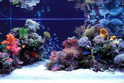 Aquascape 7