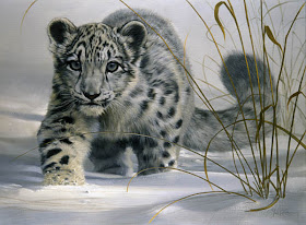true-wildlife-snow+leopard2.jpeg