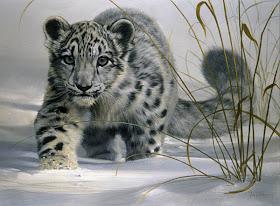 true-wildlife-snow+leopard2.jpeg