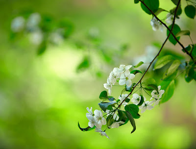 Amazing green and white flowers - Flores hermosas