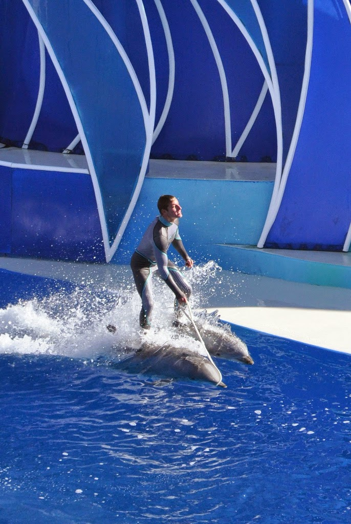 Sea World trainer rides dolphins