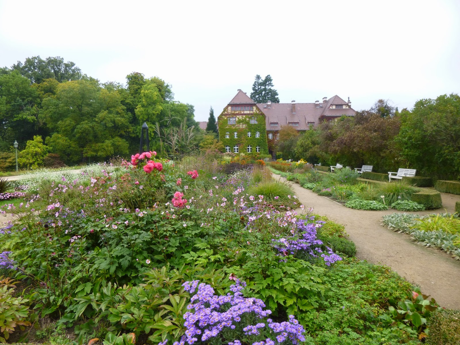 Travel Report    Berlin Botanical Garden: Papaya, Zigzag Goldenrod, Ladyu0027s  Mantle, Male Fern, Firecracker Vine And More!