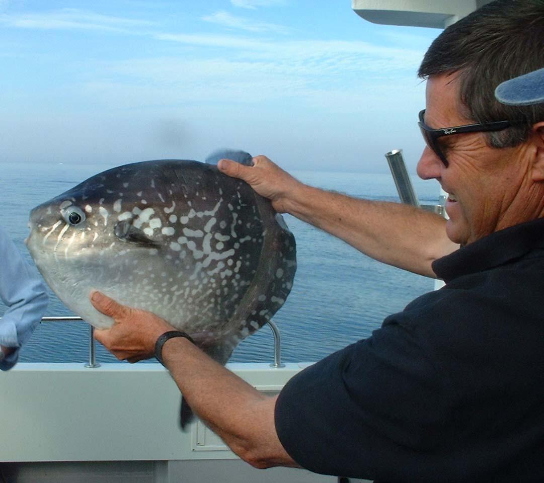 BABY: Ocean Sunfish (Mola mola) | Animals: Character Animals ...