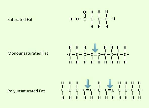 Seven Days Per Week Stpm Biology Biological Molecules Part 10