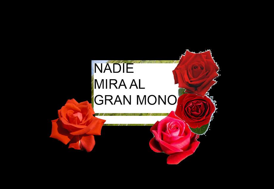 NADIE MIRA AL GRAN MONO
