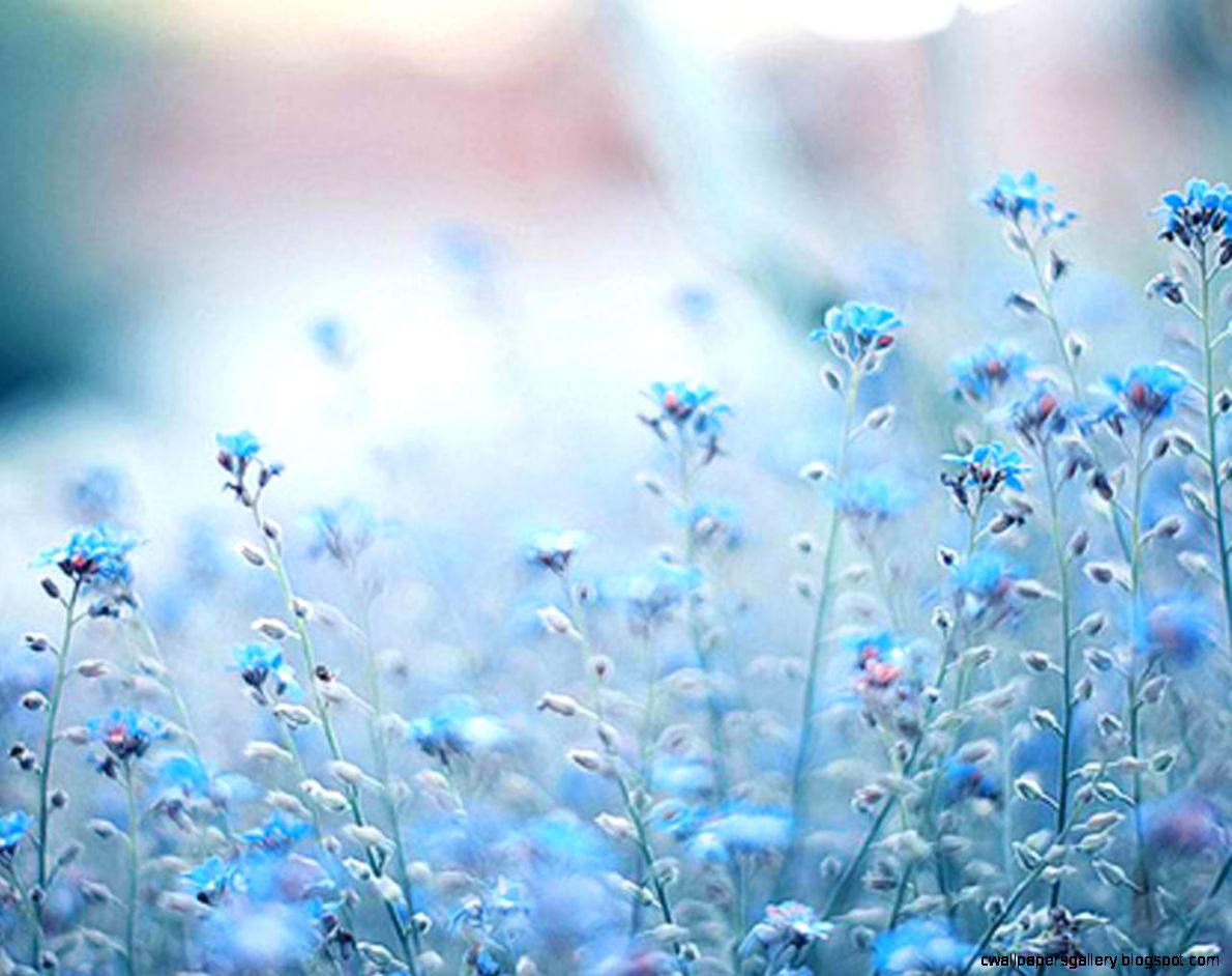 Blue Flowers Tumblr