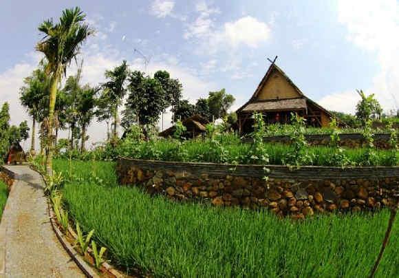 Pesawahan di Kampung Kuta (foto Baltyra.com)