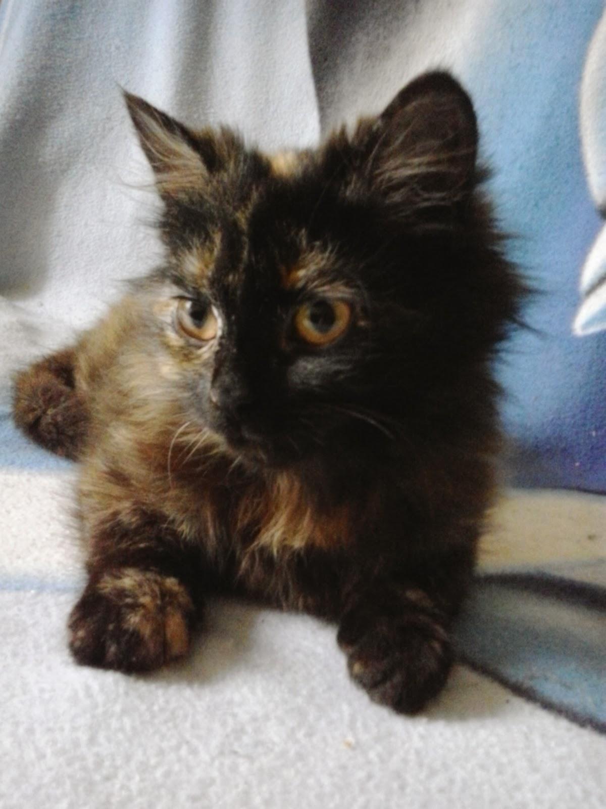 Najlepszy kot na świecie :)