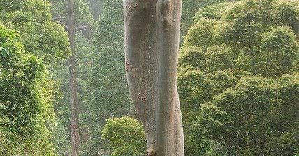 & ShowMe Nan: Borneo Rainforest Canopy Walkway