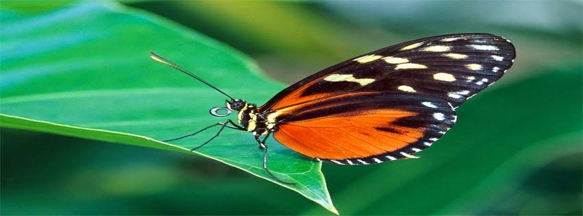 facebook titelbild butterfly