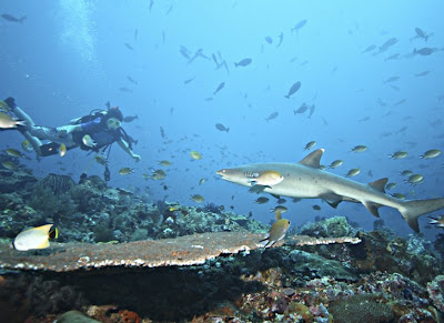 The most extreme diving spots in the world