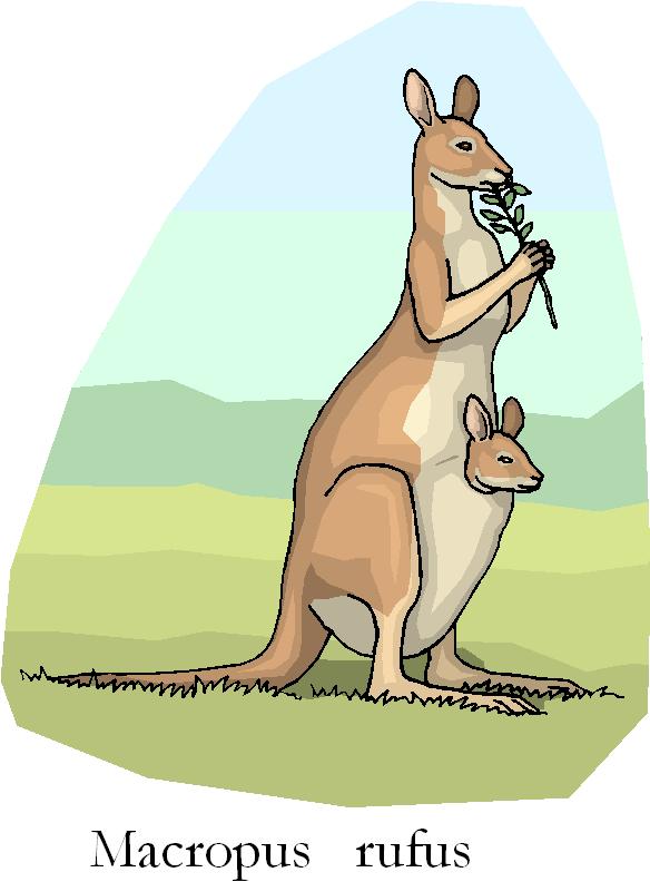 Kangaroo Eat Leaf Free Animal Clipart