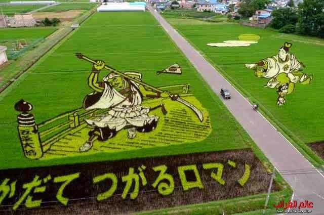 حقول الأرز، رسومات عجيبة، عالم العجائب