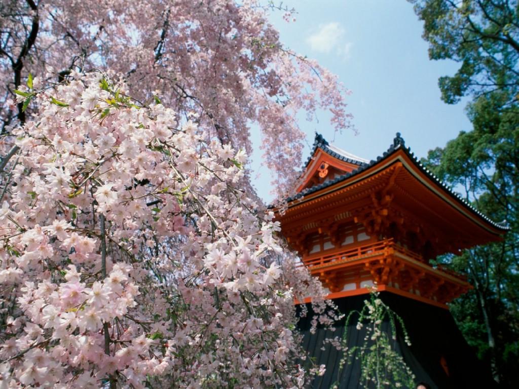 http://3.bp.blogspot.com/-TT_UsRaQkrU/TfPMwpBbCII/AAAAAAAAD-E/CqJulXTRjrg/s1600/cherryblossomsninnajitehq8.jpg