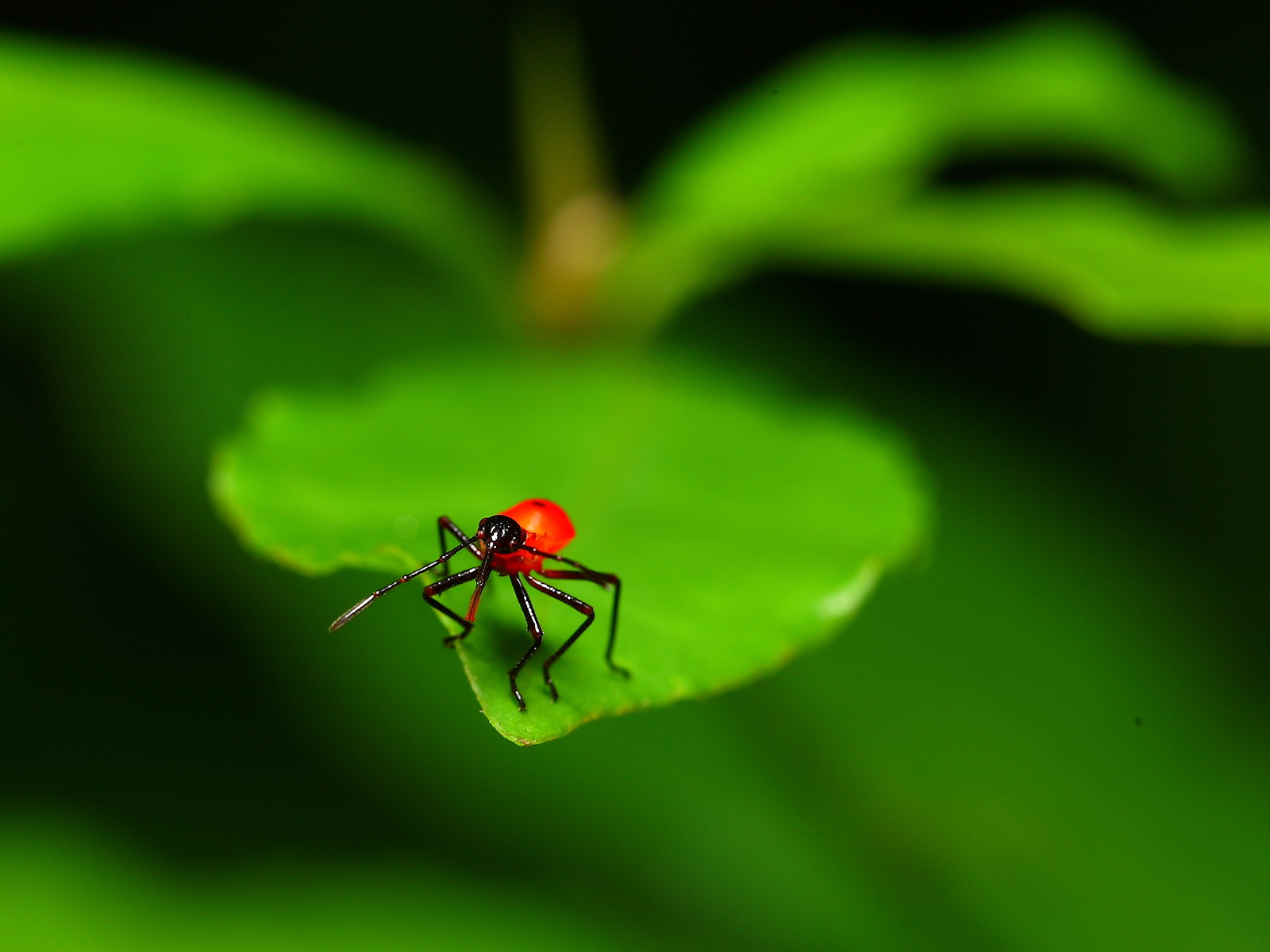 Insects Macro Wallpapers