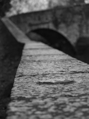 Foglia di Tiglio al ponte della Brusia