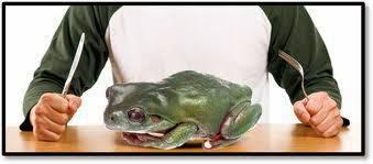 makan katak