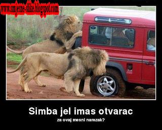 Simbin narezak, lav,LUDE SLIKE   AFRIKA
