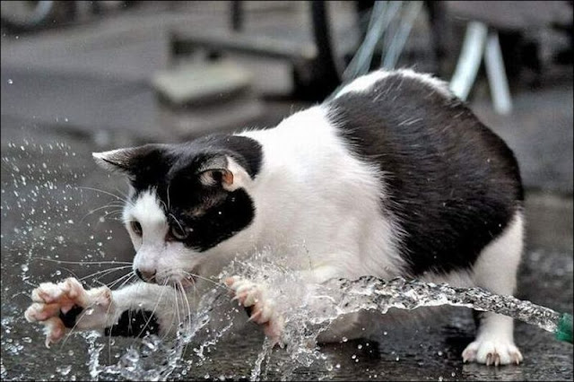 Funny cat pictures part 14, cat plays with water