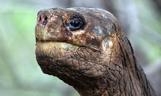 Image of Lonesome George to illustrate this story about tortoises and dullness at Friendly Encounters