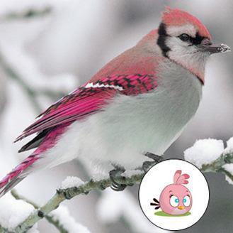 angry bird rosa real
