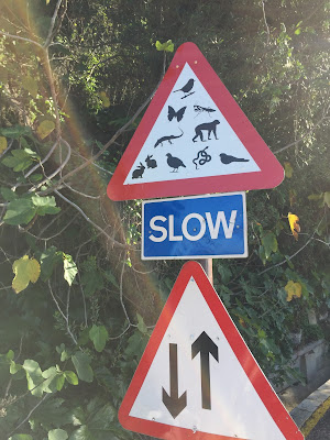 Slow – all kinds of critters