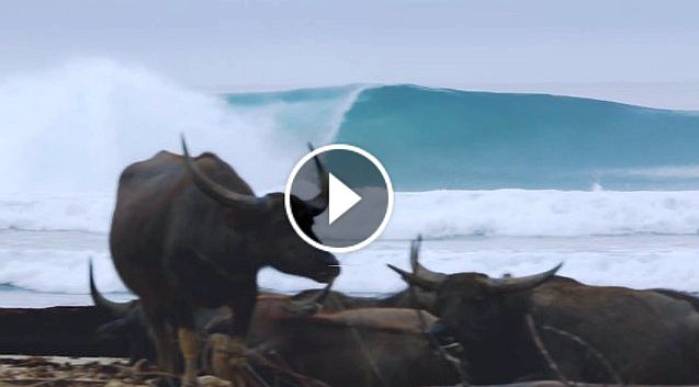 Buffalo Rendang - Torren Martyn Garrett Parkes in North Sumatra