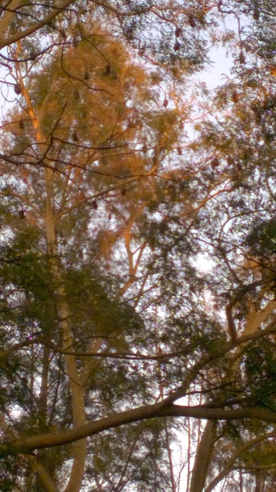 Trees, bat, bats, vampire