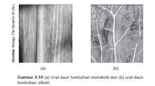 perbedaan daun monokotil dan dikotil