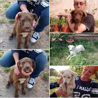 cuccioli Caserta adozione cani