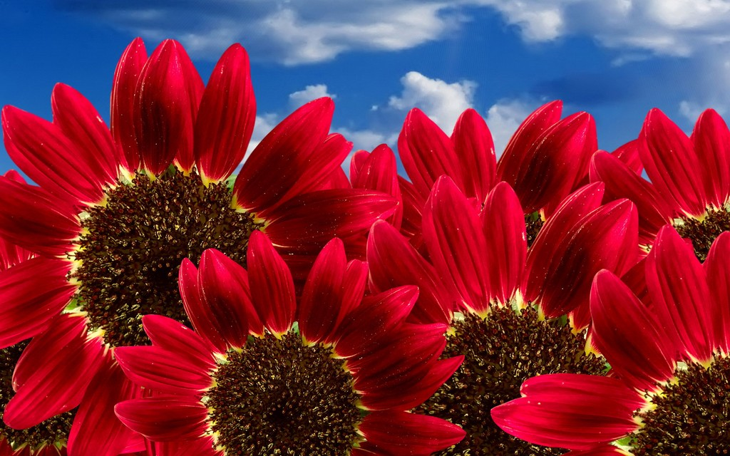 flowers for flower lovers flowers wallpapers desktop hd