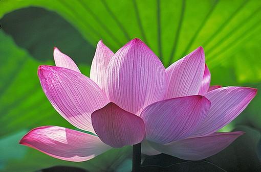 Consciousness energy path 111 buddhist symbols mudra gestures buddhist symbols mudra gestures mightylinksfo