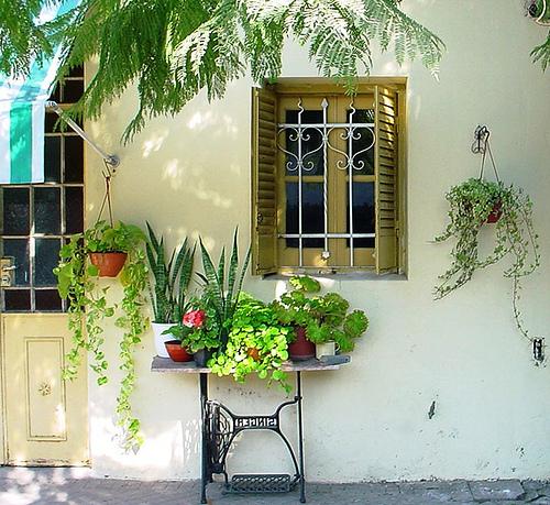 mini jardim de temperos : mini jardim de temperos: de temperos e ervas para usar em seus pratos e deixá-los com um