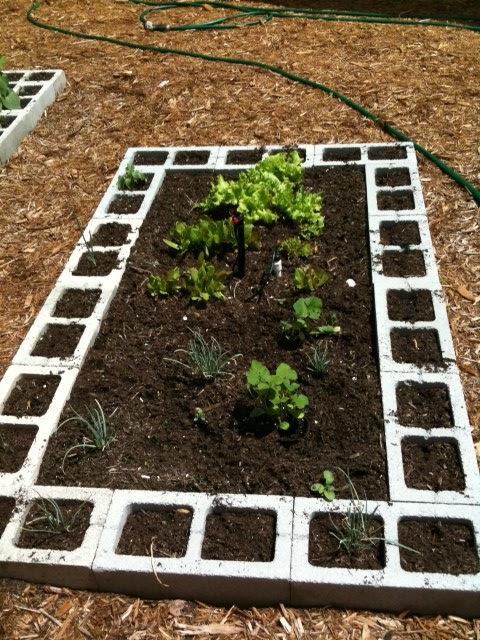 4 the luv of Vegetable Garden Design