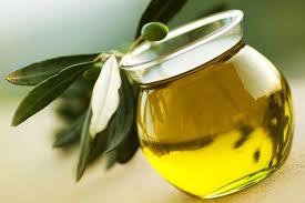 دراسة بسيطة لمشروع إنتاج ثمار و زيت الزيتون لمساحة 50 فدان