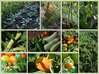 В зеленчуковата  леха