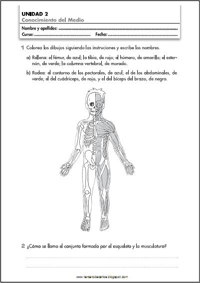 http://www.primerodecarlos.com/TERCERO_PRIMARIA/octubre/Unidad2/fichas/cono/ficha3.pdf