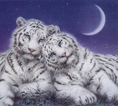 Desktop Backgrounds 4U: Fantasy Cats Abstract Desktop Backgrounds Black And White