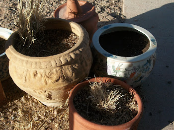 Pots ready to plant